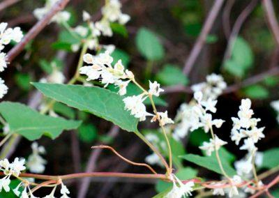 Madre Selva en flor