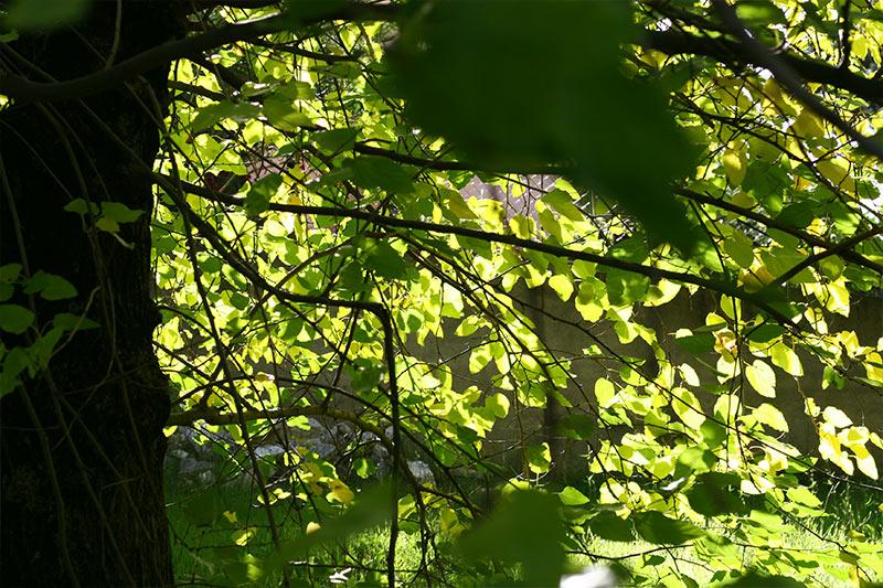 jardin_la_solana_03